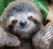 wood - sloth.JPG